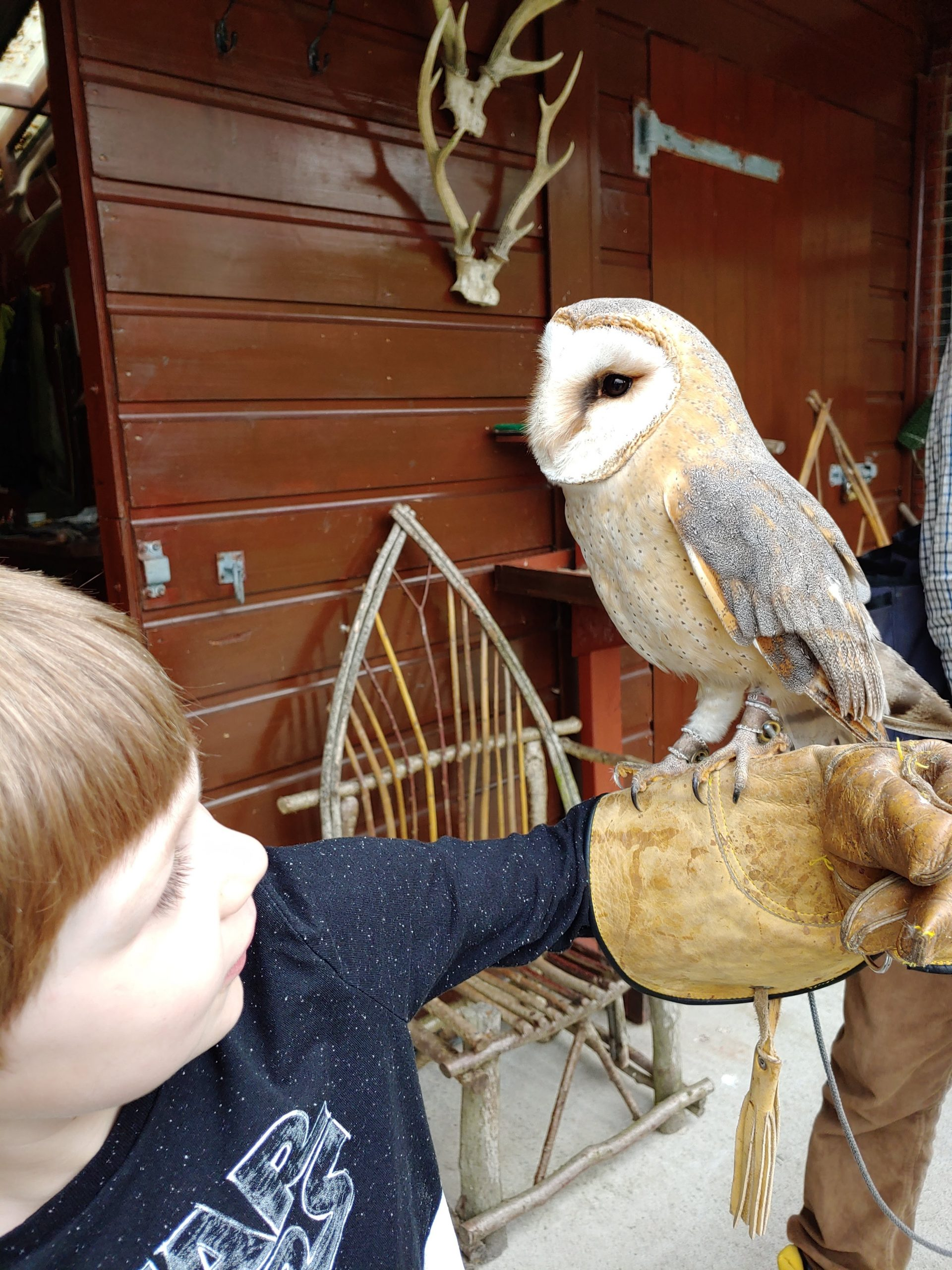 catching owls at the castle hotel
