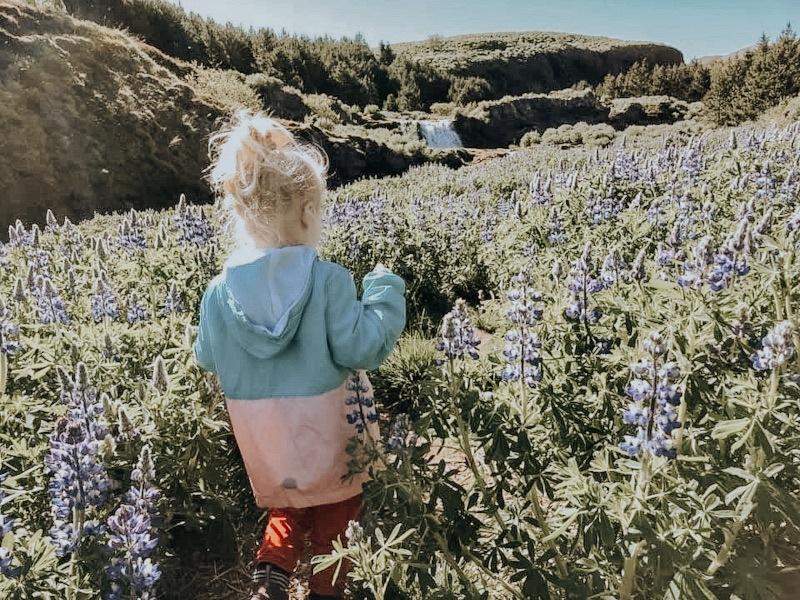 girl wildflower field Fossarett Iceland