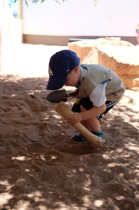 kid paleontologist digging up dinosaur bones