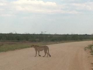 Safari with a baby - cheetah