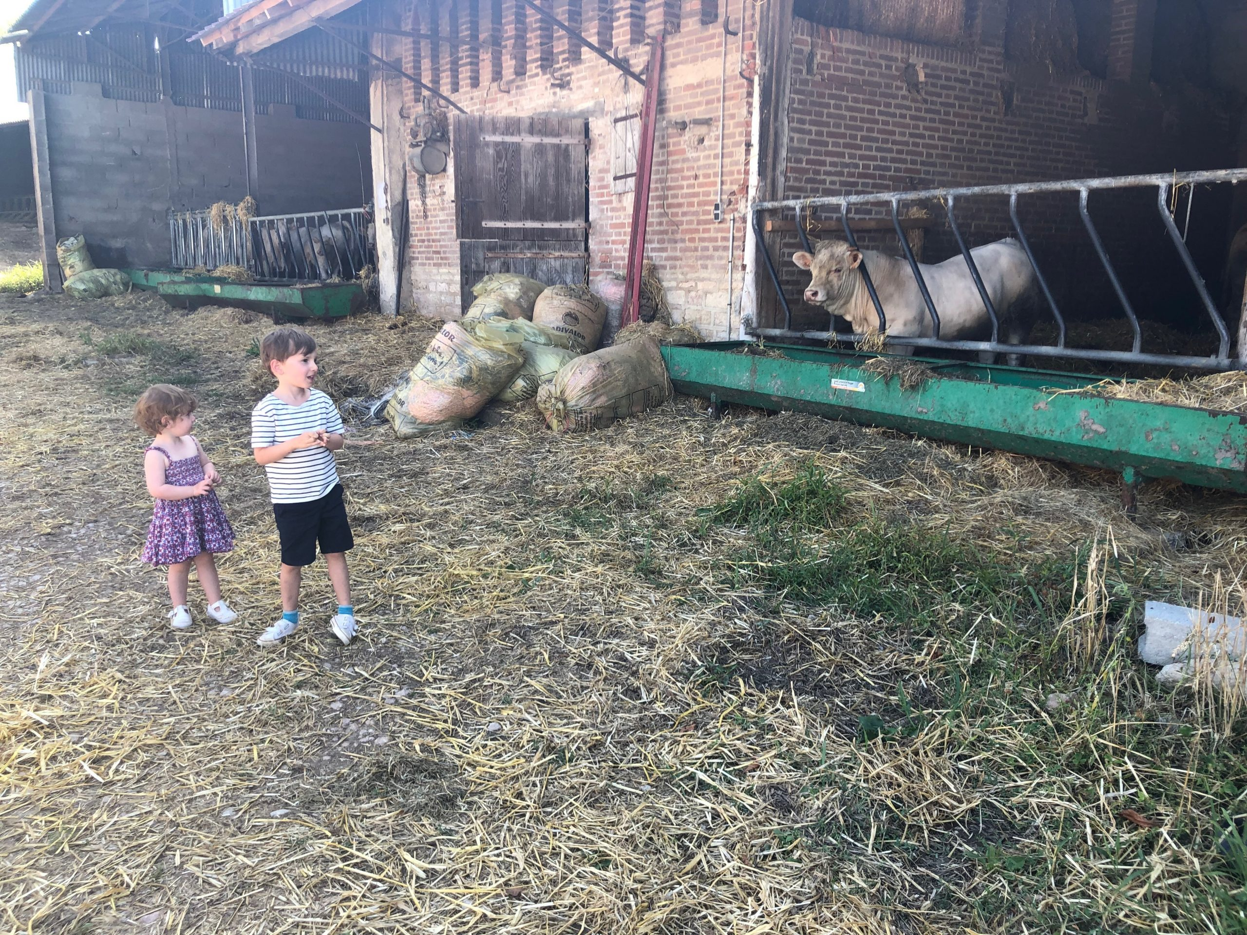 family farm with animals and children
