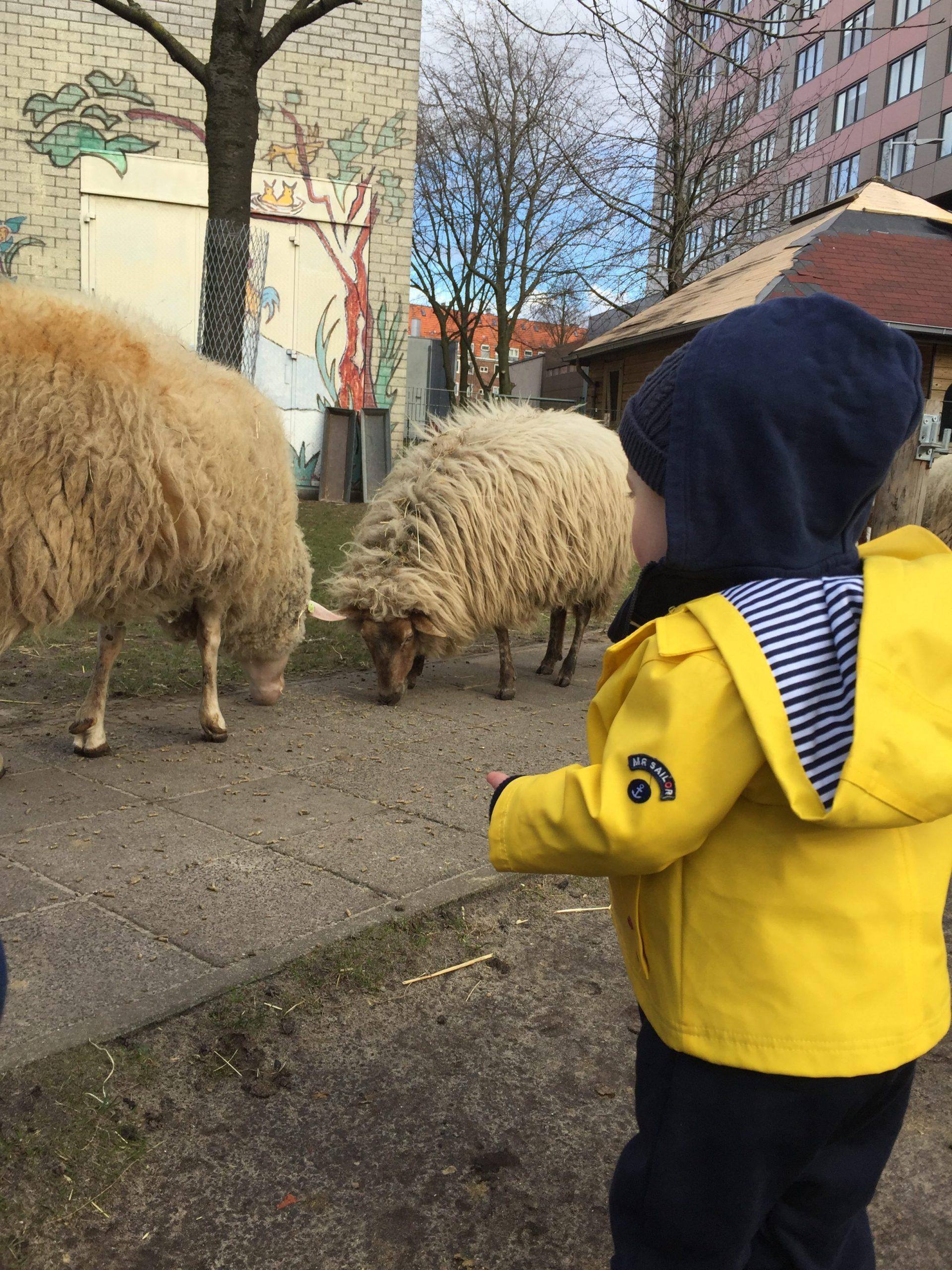 De Pijp petting farm amsterdam
