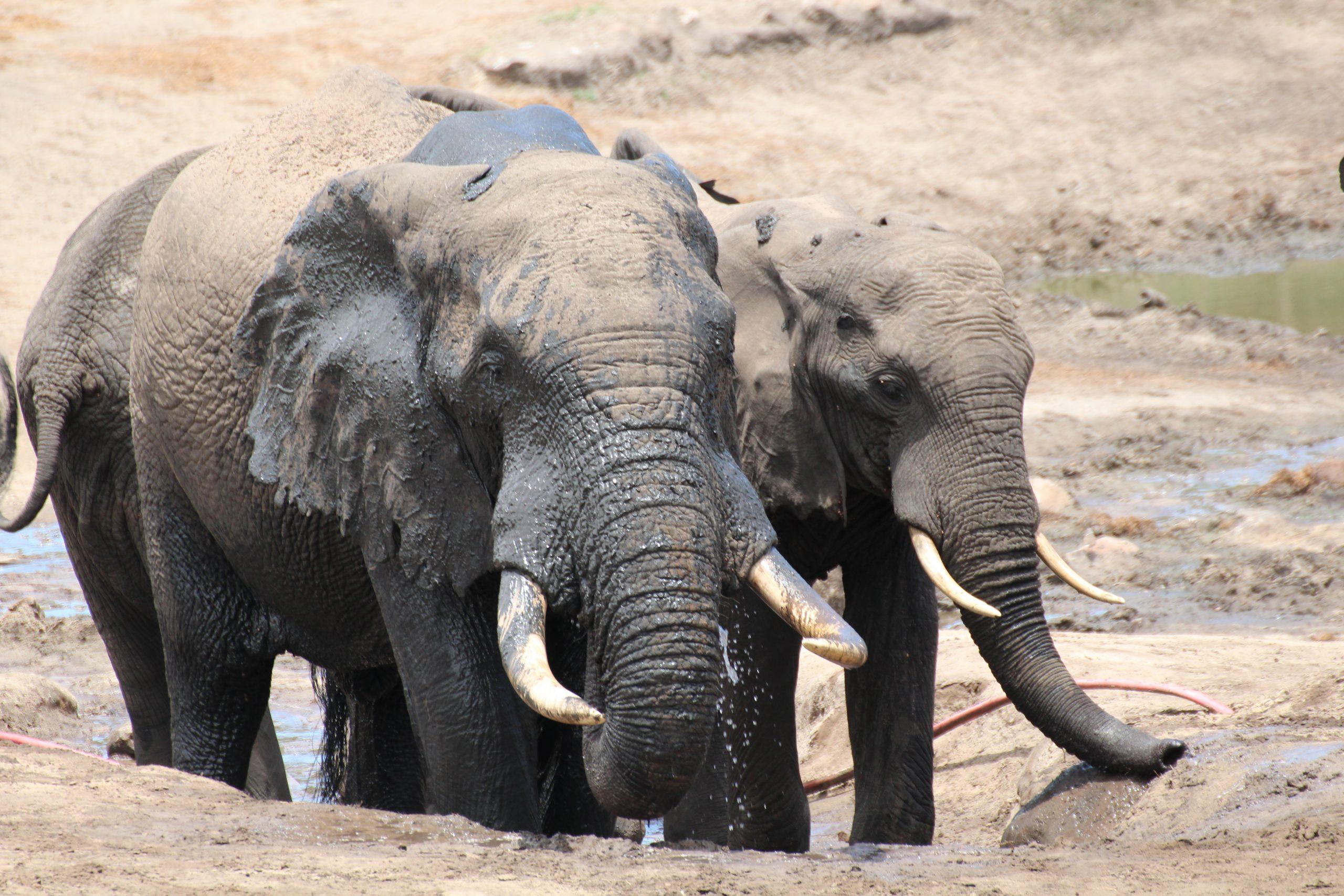 Safari with a baby - Elephants