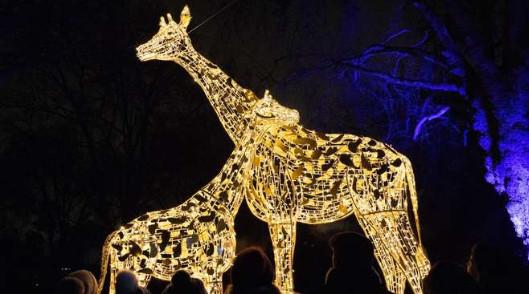 London zoo lights at christmas time