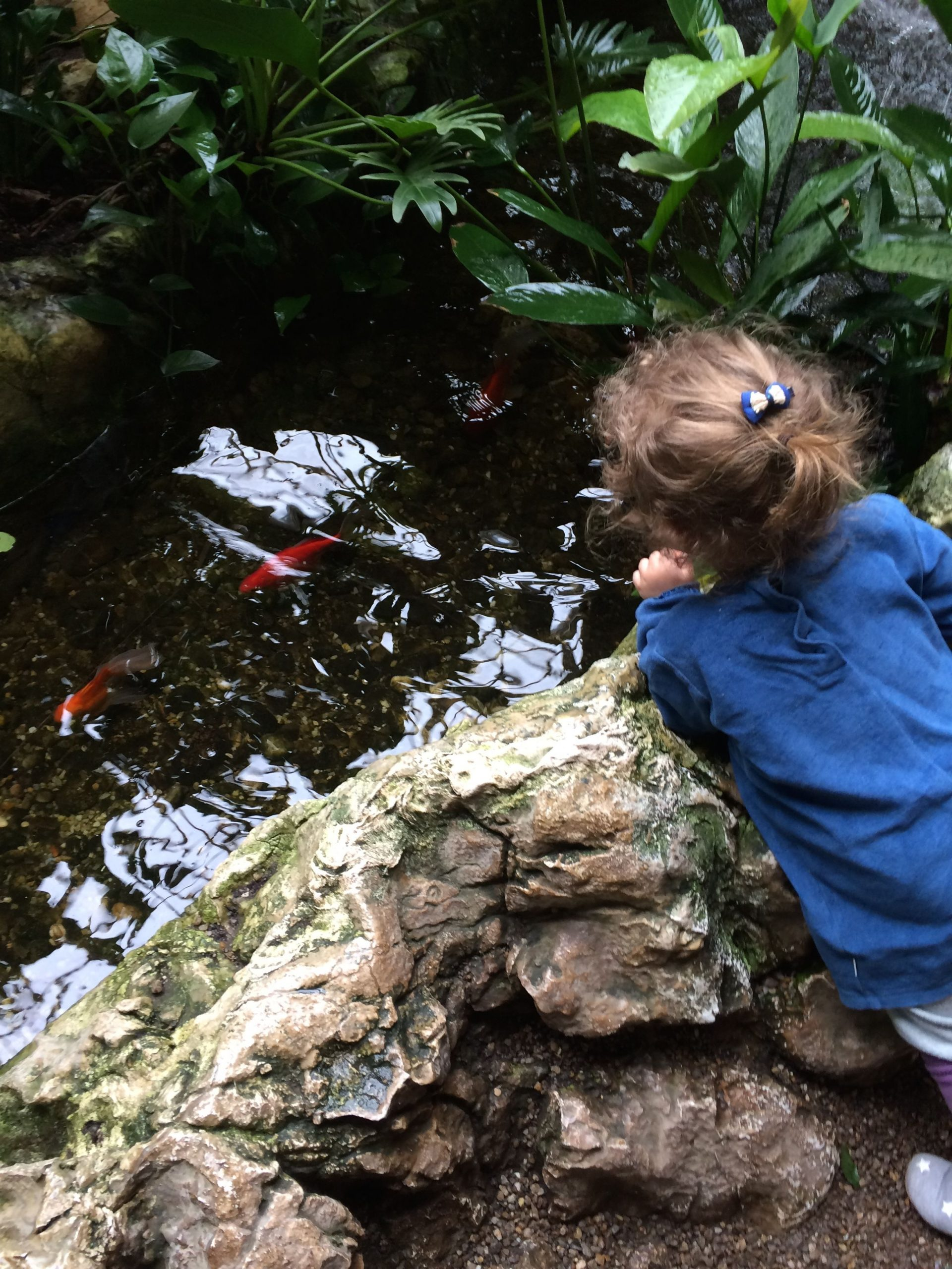 Imperial House of Butterflies with a toddler