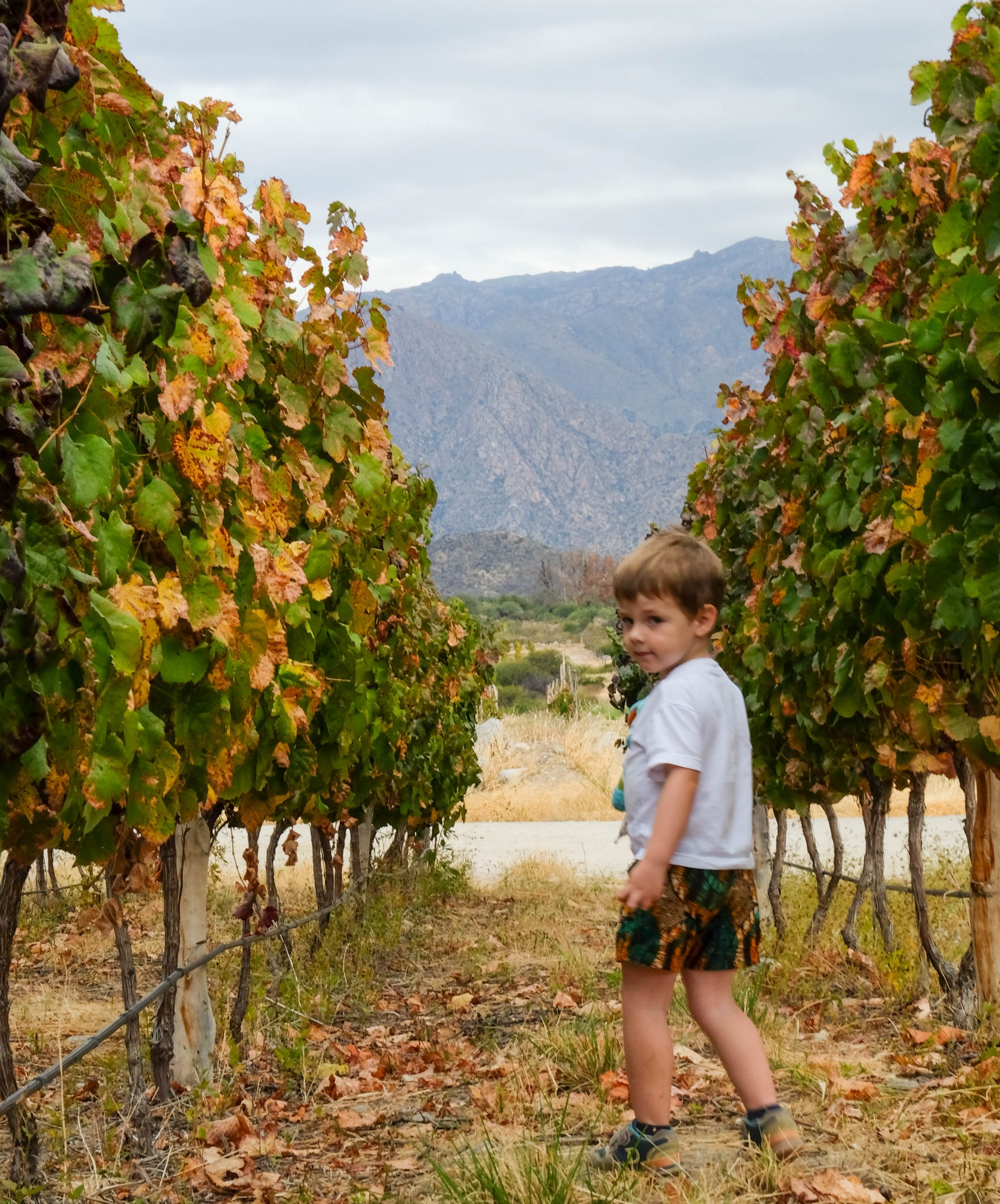toddler walking in vineyards