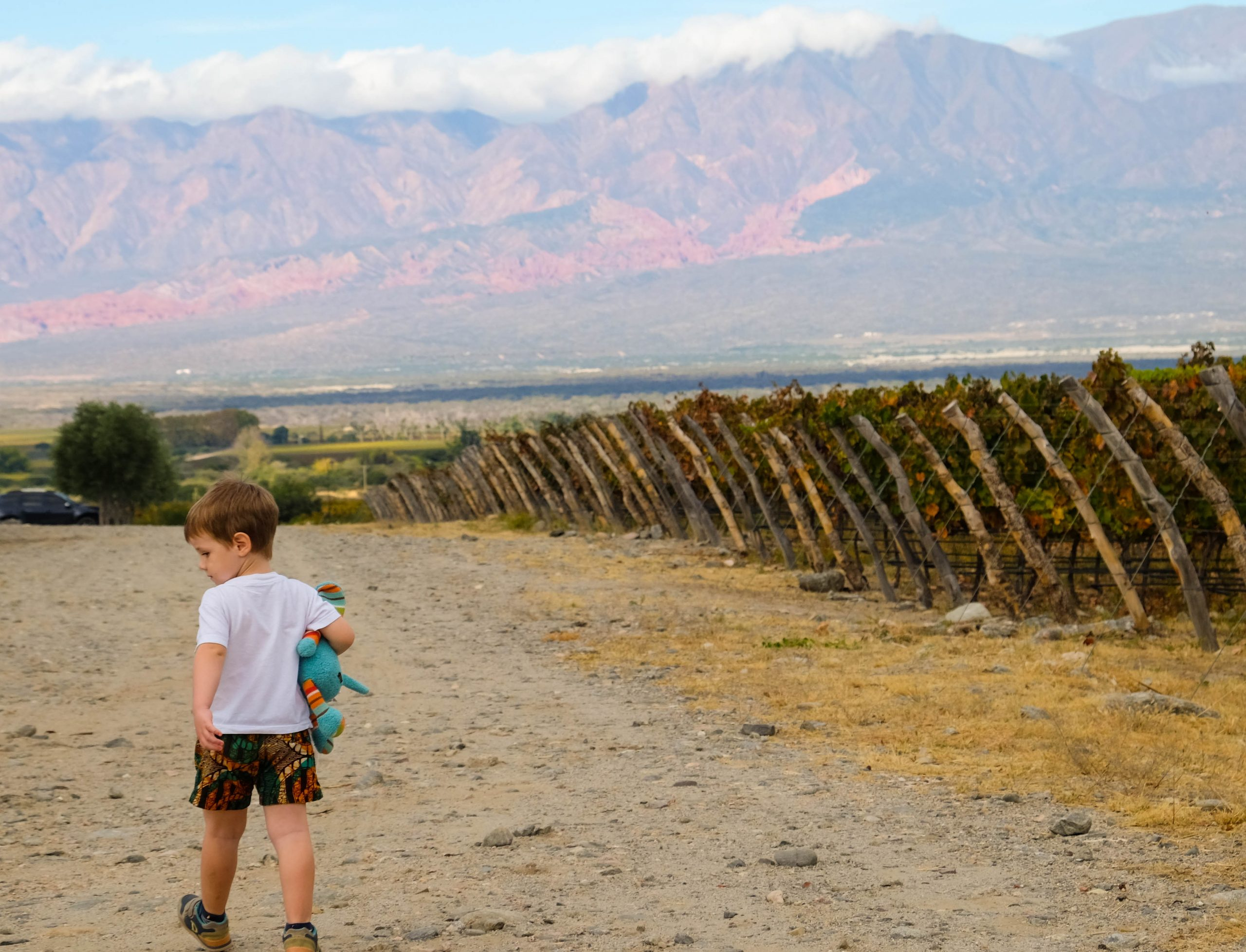 boy with stuffed animal in vineyards