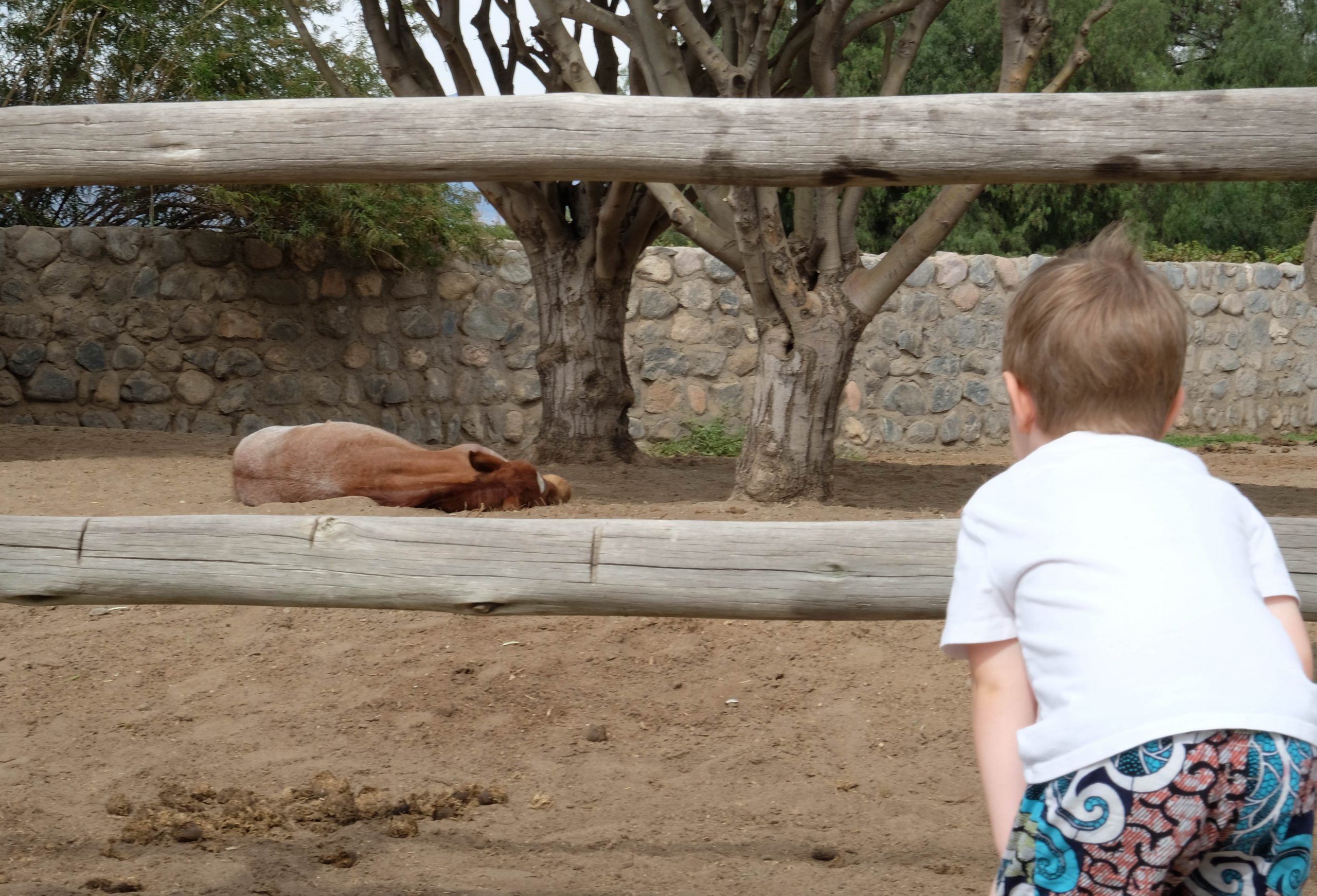 boy looking at lying horse in paddock