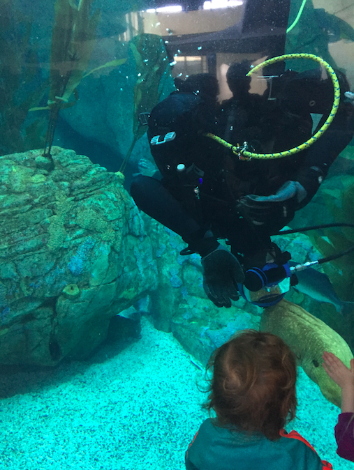 California Sea Bass tank