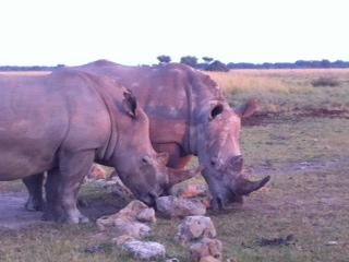 Safari with a baby - rhinos