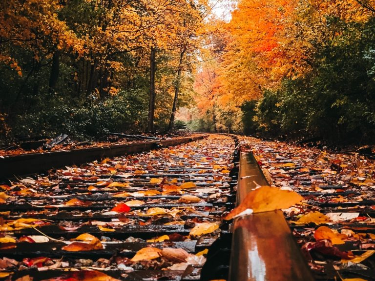 Fall foliage train rides are a great way to socially distance while also getting out and about a bit!