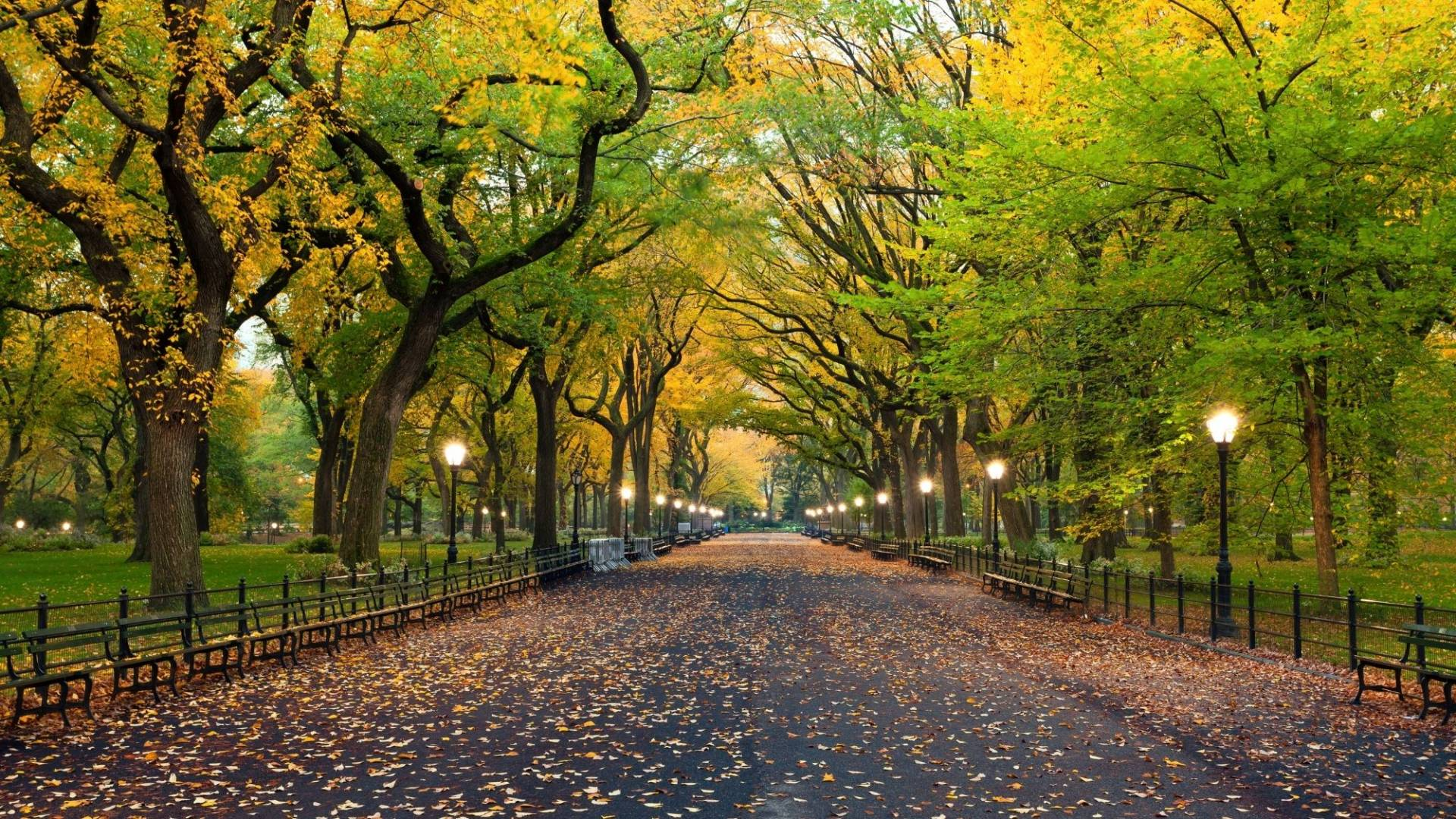 Central Park is an amazing place within New York City, but it has a bit of a dark past. Learn about New York City through social justice issues such as how Central Park came to be!