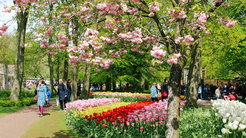 The KeukenhofTulip Gardens
