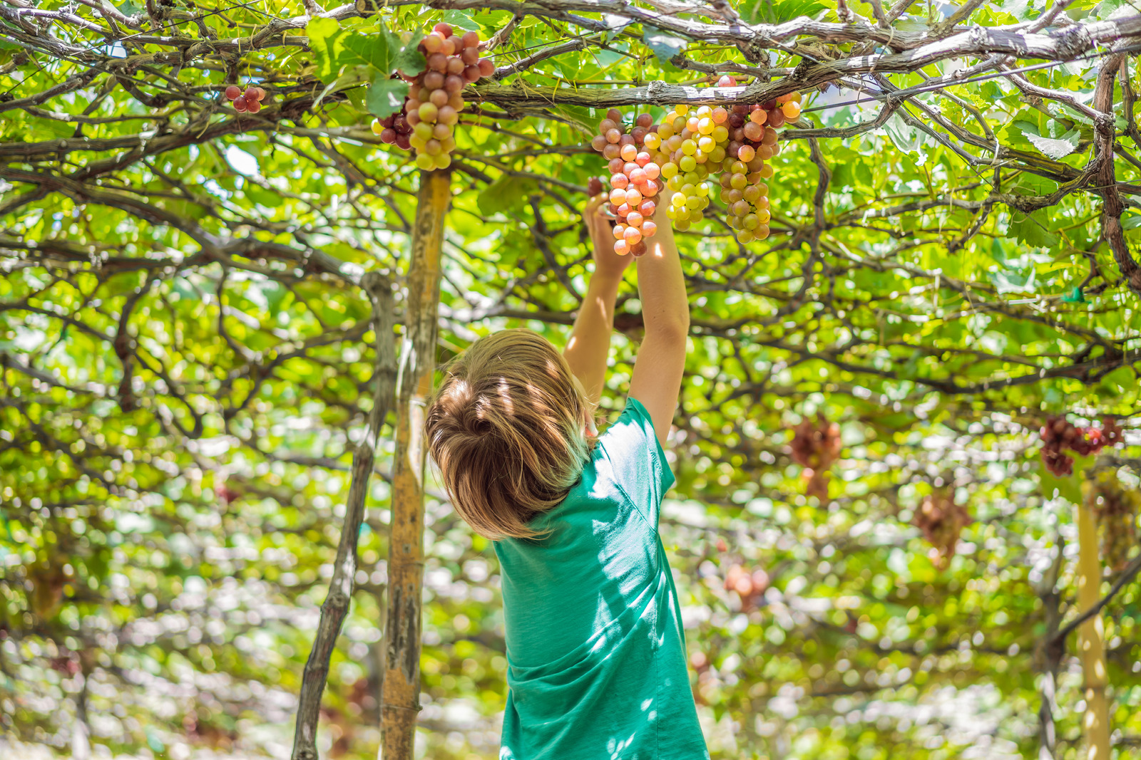 Consider agritourism for your next trip in order to support local farming communities while traveling.