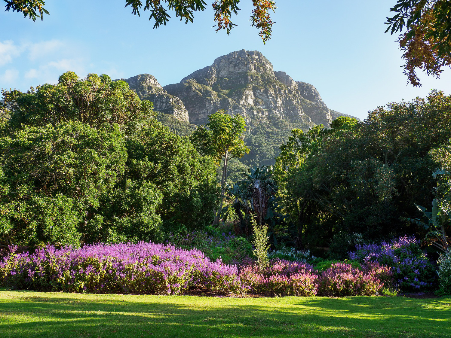 A beautiful oasis awaits at the Kirstenbosch National Botanical Gardens, where the natural flora will stun even the most discriminating of travelers.