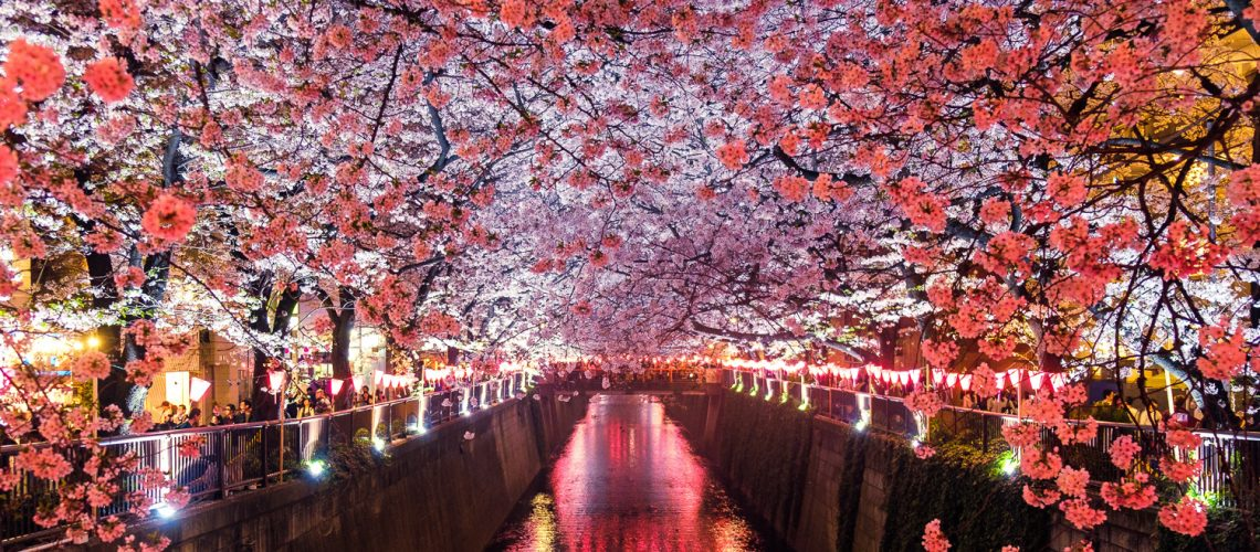 The Hanami Festival in Japan also known as the Cherry Blossom Festival